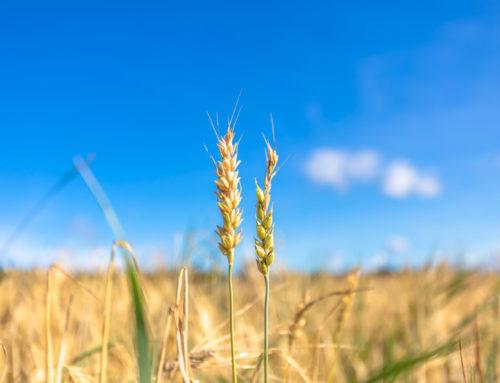 EU:n yhteinen maatalouspolitiikka