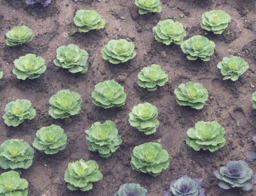 Maatalouden kehityksen suunnanmuutos