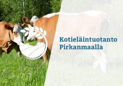 taustalla kaksi lehmää päät vastakkain, päällä teksti kotieläintuotanto Pirkanmaalla
