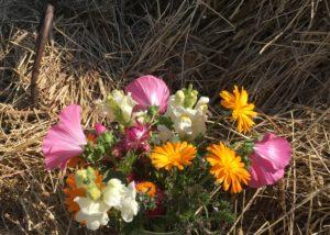 värikäs kukkakimppu, taustalla heiniä