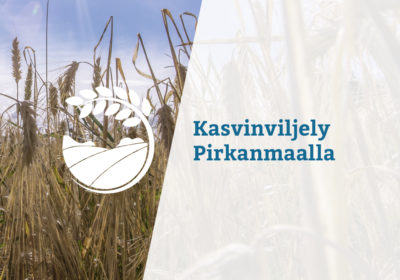 taustalla lähikuva viljapellosta, päällä teksti: kasvinviljely Pirkanmaalla
