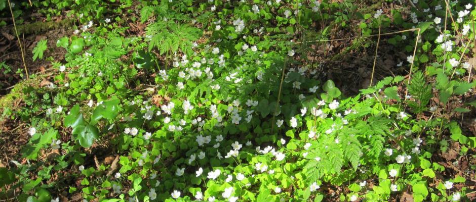 ketunleivät metsässä